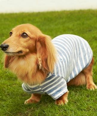 Naughty Dog 刺繍ロゴインディゴボーダーTシャツ(ダックスフント対応サイズ) ドッグウエア 淡色